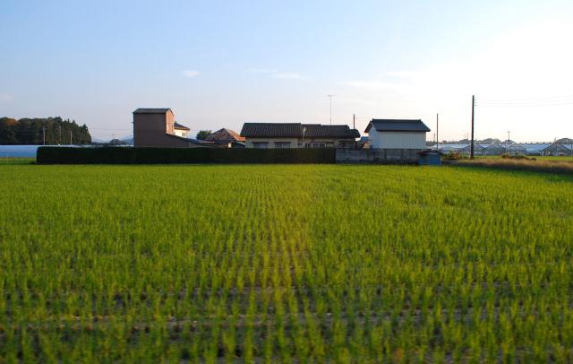 MASHIKO-TANBO.jpg