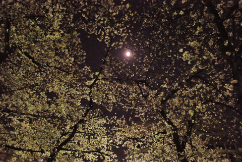 sDSC_0890.jpg